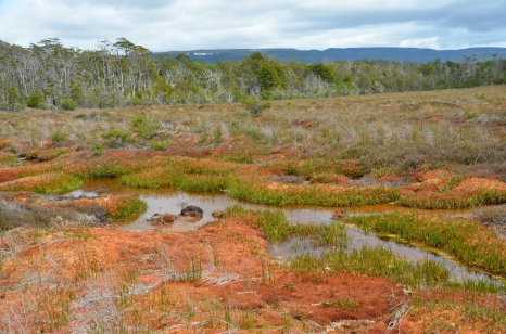 Pool, lawn and hummock landforms in Patagonia.