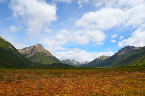 And a peat bog of ombrotrophyyyy! This one is in Patagonia.