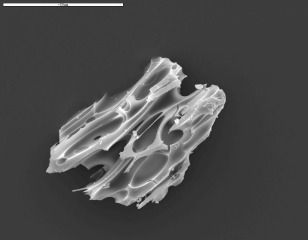 Highly magnified Icelandic tephra shard found in a Scottish bog. Photo credit: Pete Langdon.