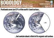 Peatlands as carbon stores