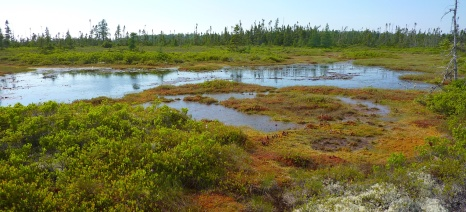 Pools, lawns and hummocks in a small area of Petite Bog, Nova Scotia
