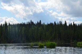 'Drunken trees' at the lake edge.