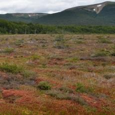 A bog in Patagonia.