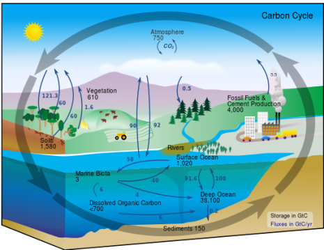 Graphic representation of the carbon cycle. Image credit: Kevin Saff via Wikimedia Commons.