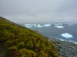 The subject of today's outreach: moss banks in the Antarctic Peninsula