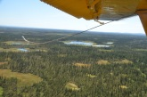 Peatlands create clearings in the spruce forest of the Brooks Range, Alaska