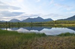 A mat of Sphagnum develops at the edge of an Alaskan lake.