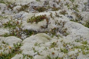 Lichens can dominate in dry conditions.