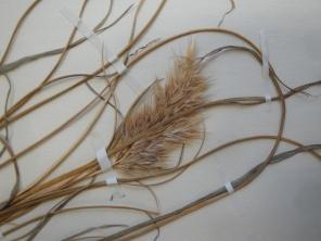 Close examination of a plant specimen