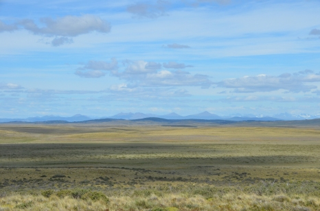 The semi-arid grasslands of northern Tierra del Fuego