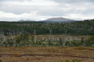 Peat, glorious peat - as far as the eye can see