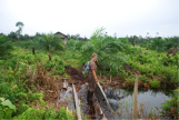 Crossing a drainage channel to the smallholder oil palm site with degraded remnant swamp forest in the background