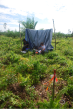 Desperately seeking shade in the smallholder oil palm plantation