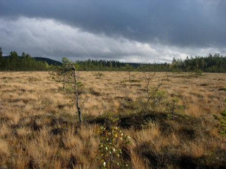 One of Matt's PhD field sites at Fagelmossen, Sweden