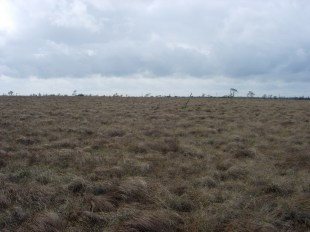 PhD site #1: Walton Moss, UK