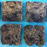 Multiple peat samples sliced in Toulouse