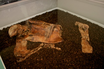 Lindow Man on display in Manchester Museum (Wikimedia Commons)