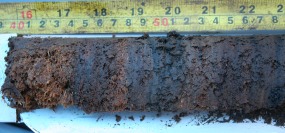 Charcoal from past burns in the peatland record.