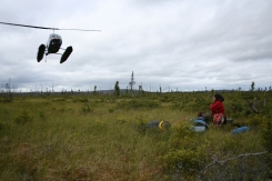 Helicopters are the only way to reach these remote bogs.