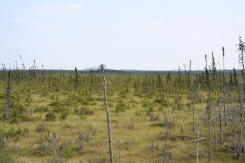 A view across the bog in Quebec