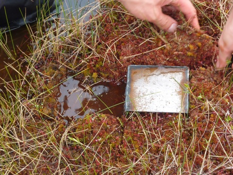 Monolith tin inserted into the ground to lie flush with the peat surface
