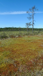 Swedish peatland fieldwork, June 2014