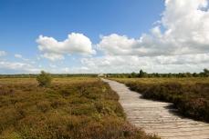 Corlea trackway reconstruction in Ireland (Credit: Kevin King via Wikimedia Commons)
