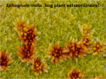 The wonder of Sphagnum