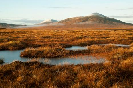 Forsinard Flows (Credit: Eleanor Bentall/RSPB)