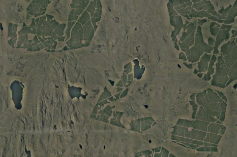 Afforested peatlands in the Flow Country (Credit: Google Maps)