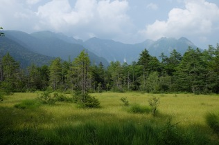Peatland in the Japanese Alps