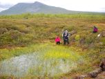 A collapsed and now inundated peat dome in Abisko.