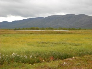 A well-developed arctic fen.
