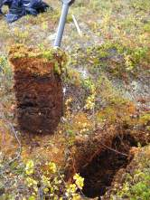 Our peat cores, encapsulating several hundred years of the peatland's history.